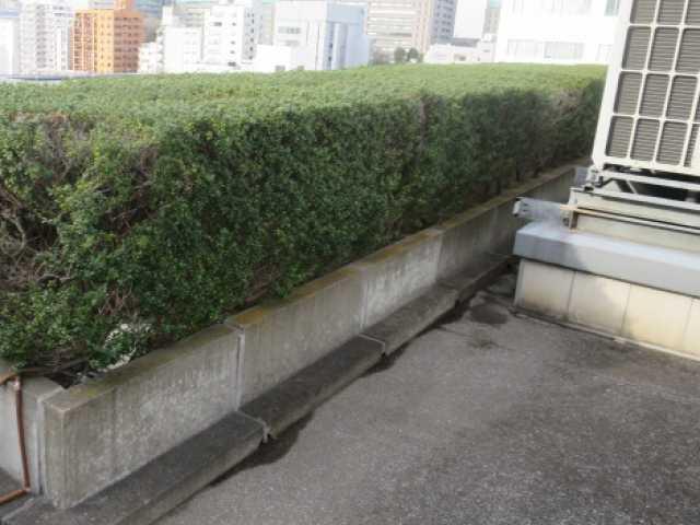 植栽撤去:工事前